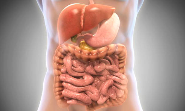 10 Ways to Improve Intestinal Bacteria Based on Science