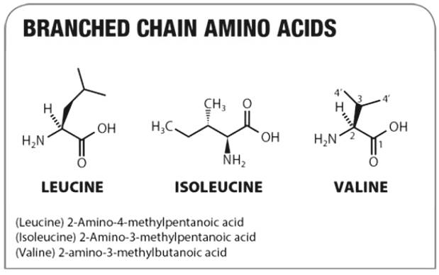 Assessment of Benefits of BCAA Branch Branch Amino Acid