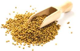 Fenugreek - Herbs Giving Indian Health Benefits ...