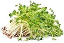 Lingnan Grass