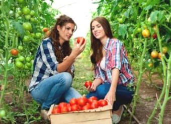 Tomatoes: Ingredients Nutrition and Health Benefits