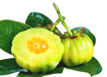 How Does Garcinia Cambogia Support Weight Loss?