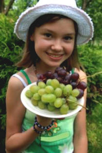 The Truth About the Grape Seed -