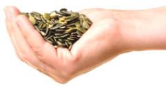 Top 11 Health Benefits of Science Pumpkin Seeds