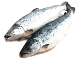 Warning About Farming Salmon And Other Fishes Can ...
